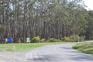 Healesville to Narbethong motorcycle route australia